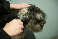 oren vrijmaken van haren